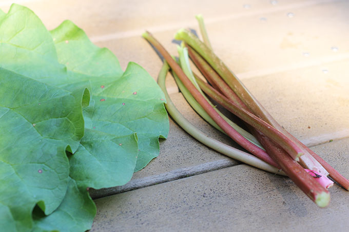 rhubarb stems and leaves
