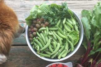 fresh snap peas in bowl with dog